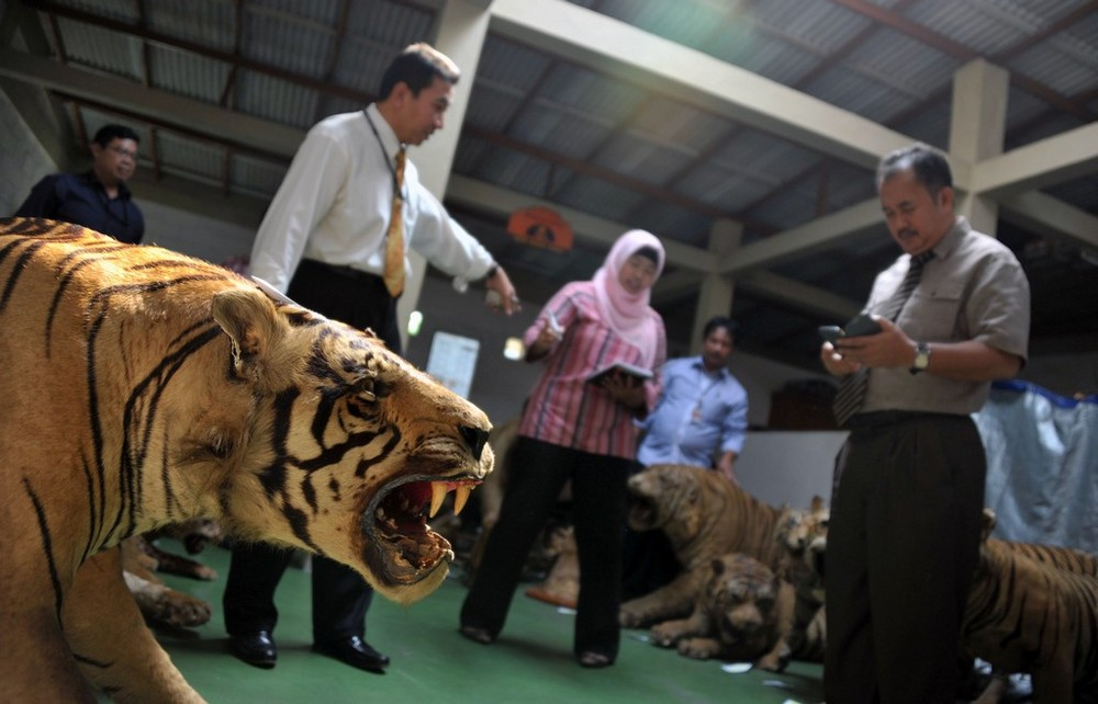 The Most Dangerous Predators on the Planet – is the Humans...