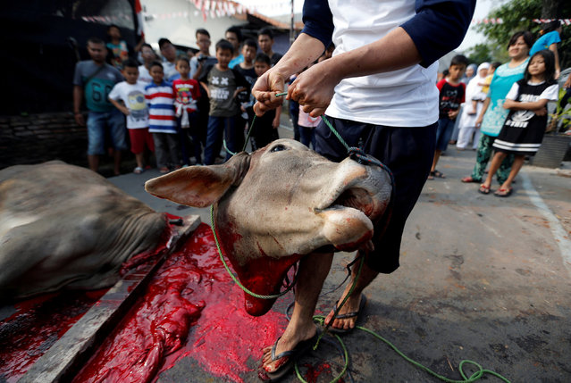 A volunteer carries the head of a bull after it was sacrificed for the Muslim holiday of Eid Al-Adha at Matraman district in Jakarta, Indonesia September 1, 2017. (Photo by Reuters/Beawiharta)