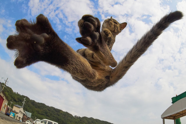 This talented photographer has managed to snap a group of mortal tomcats in a variety of high-flying kung fu poses. (Photo by Hisakata Hiroyuki/Caters News Agency)