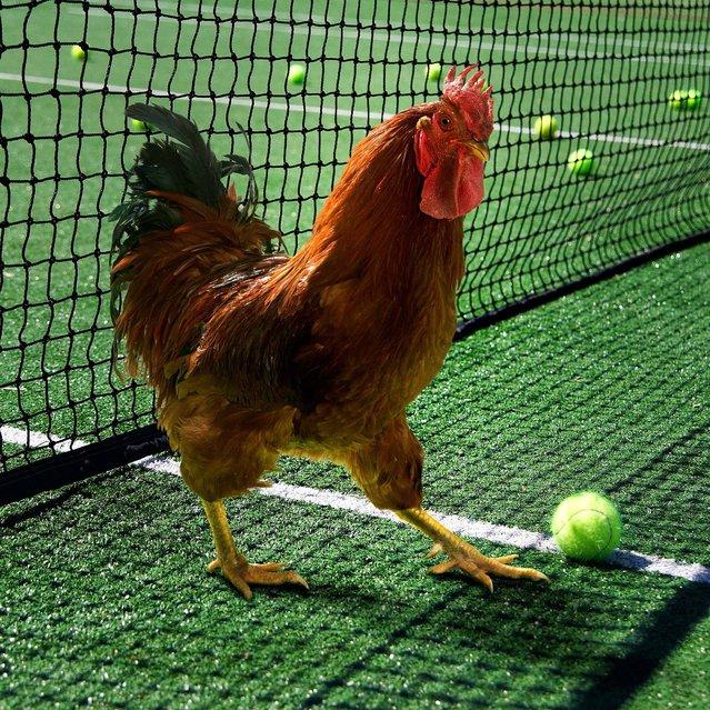 """Nice Pecks"" calendar: Tennis. (Photo by The happy egg co.)"