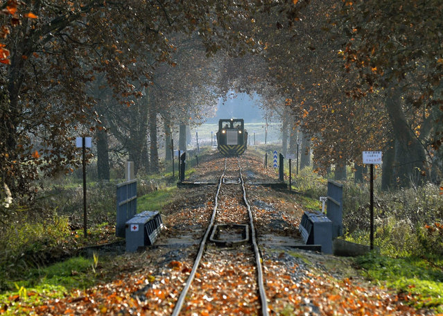 A local train carries its timber cargo on the Csomoder forest railway line near Varfolde, 240 kms southwest of Budapest, Hungary, 06 November 2015. Logging has restarted in the surrounding forests on this day after a prolonged idle period that was due to persistent rainfall. (Photo by Zoltan Mathe/EPA)